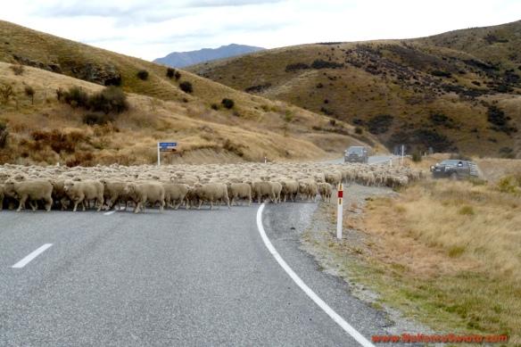 130412 P1080978 Nowa Zelandia Mount Cook